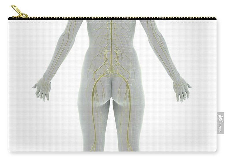 3d Visualisation Carry-all Pouch featuring the photograph The Nervous System Female by Science Picture Co