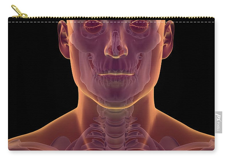 Collarbone Carry-all Pouch featuring the photograph Bones Of The Head And Neck by Science Picture Co