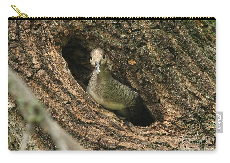 Immature Carry-all Pouch featuring the photograph Immature Hooded Merganser by Lori Tordsen