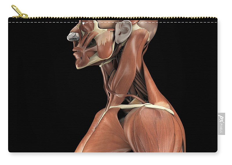 Facial Muscle Carry-all Pouch featuring the photograph Muscles Of The Upper Body by Science Picture Co