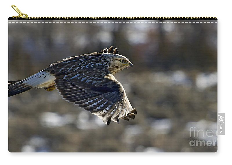 Bird Carry-all Pouch featuring the photograph Rough-legged Hawk by J L Woody Wooden