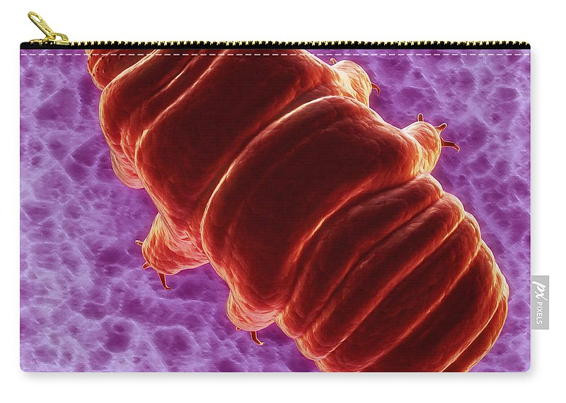 Protostomia Carry-all Pouch featuring the photograph Water Bear Tardigrades by Science Picture Co
