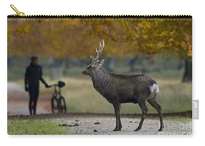 Sika Deer Carry-all Pouch featuring the photograph 110307p071 by Arterra Picture Library
