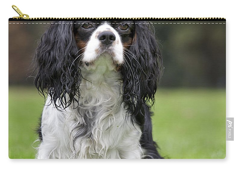 Cavalier King Charles Spaniel Carry-all Pouch featuring the photograph 111216p255 by Arterra Picture Library