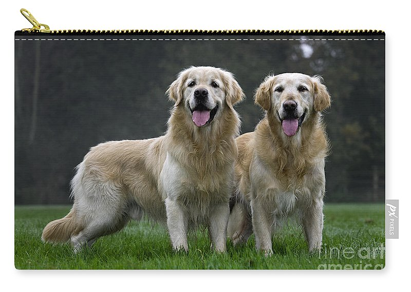 Golden Retriever Carry-all Pouch featuring the photograph 111230p058 by Arterra Picture Library