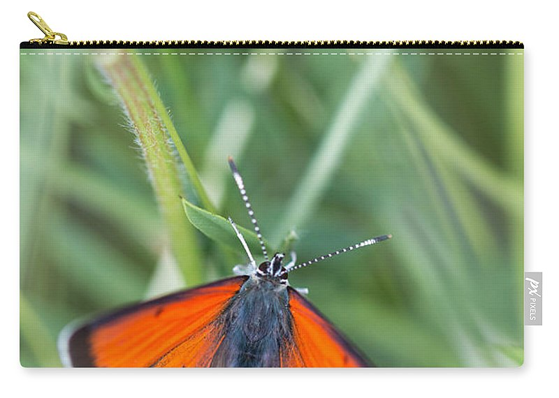 Balkan Copper Butterfly Carry-all Pouch featuring the photograph 12 Balkan Copper Butterfly by Jivko Nakev