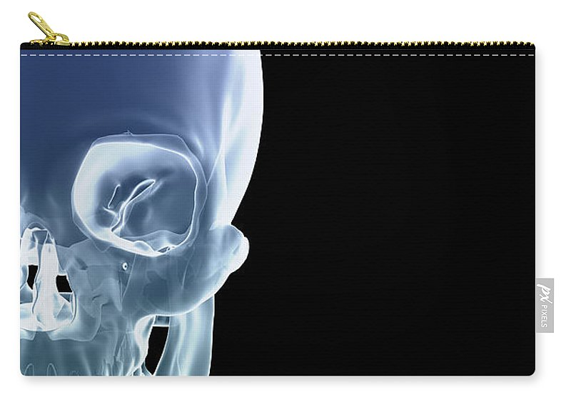 Biomedical Illustration Carry-all Pouch featuring the photograph The Skull by Science Picture Co