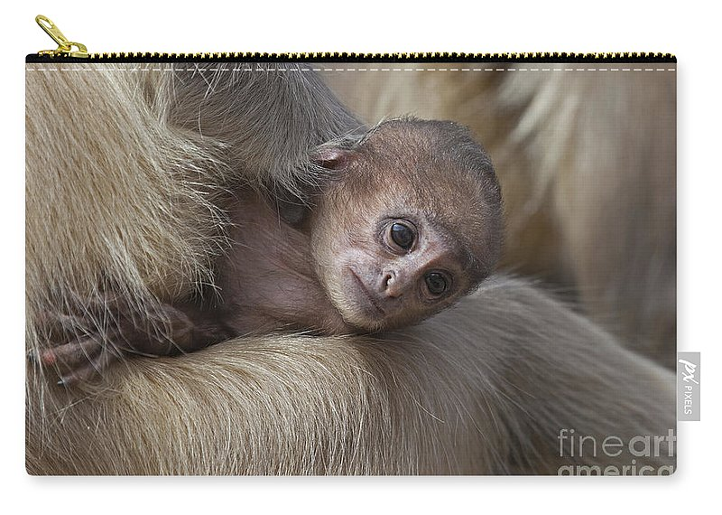 Gray Langur Carry-all Pouch featuring the photograph 120820p269 by Arterra Picture Library