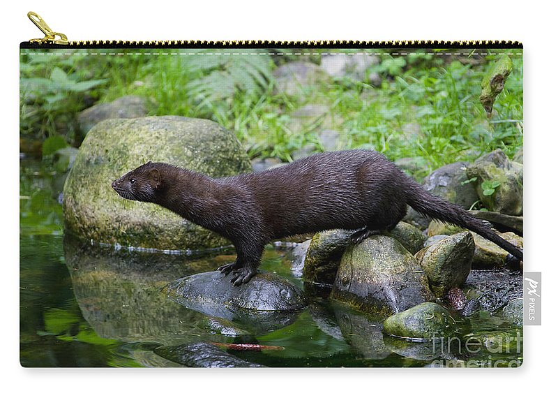 American Mink Carry-all Pouch featuring the photograph 121213p013 by Arterra Picture Library