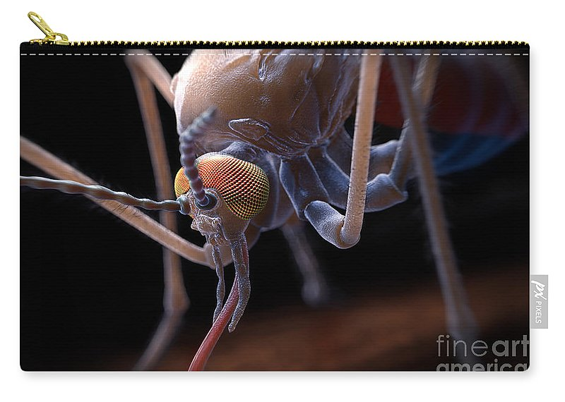 3d Visualisation Carry-all Pouch featuring the photograph Anopheles Mosquito by Science Picture Co