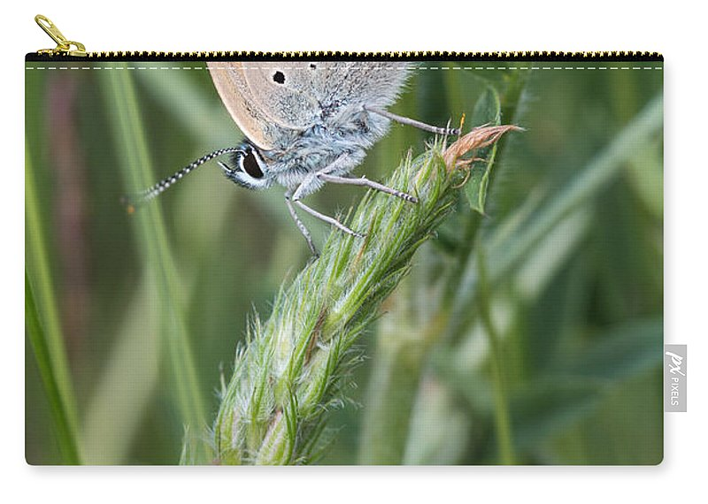 Balkan Copper Butterfly Carry-all Pouch featuring the photograph 13 Balkan Copper Butterfly by Jivko Nakev