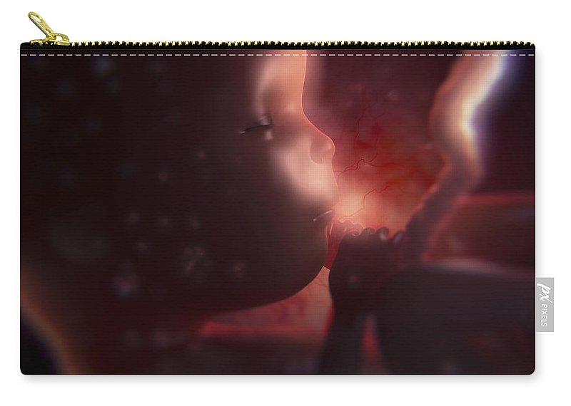Close Up Carry-all Pouch featuring the photograph Developing Fetus by Science Picture Co