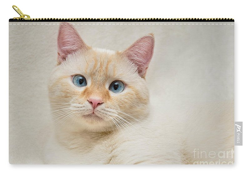 Blue Eyes Carry-all Pouch featuring the photograph Flame Point Siamese Cat by Amy Cicconi