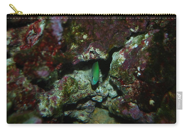Taken Through Side Of Aquarium Carry-all Pouch featuring the photograph Tropical Fish by Robert Floyd