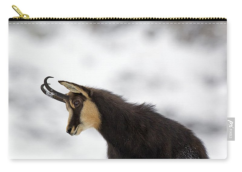 Chamois Carry-all Pouch featuring the photograph 130201p229 by Arterra Picture Library