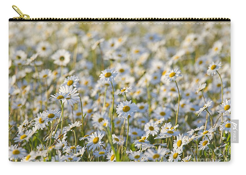 Oxeye Daisy Carry-all Pouch featuring the photograph 130215p281 by Arterra Picture Library