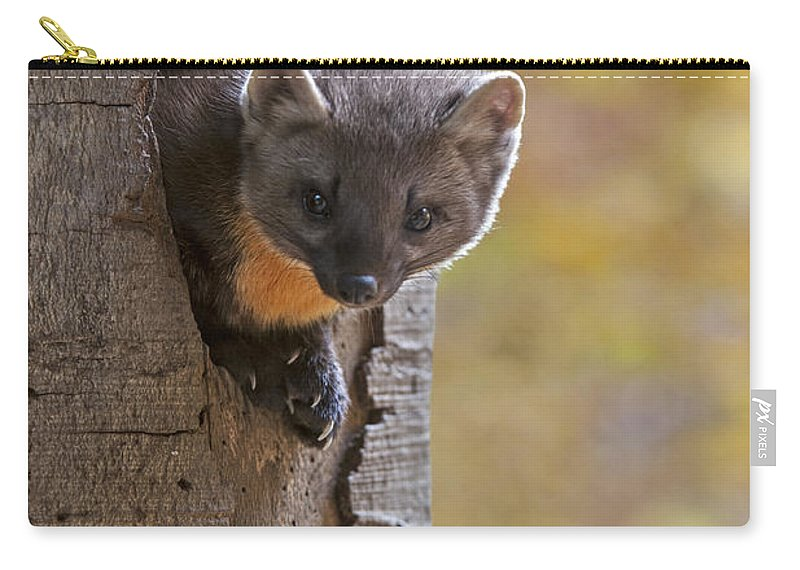 European Pine Marten Carry-all Pouch featuring the photograph 131114p020 by Arterra Picture Library