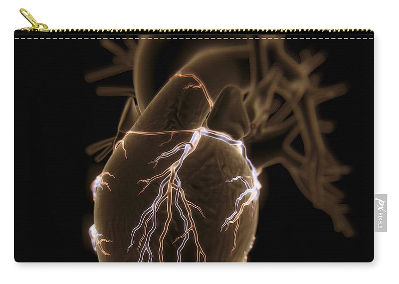 Close Up Carry-all Pouch featuring the photograph Coronary Blood Supply by Science Picture Co