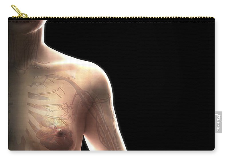 Iliac Artery Carry-all Pouch featuring the photograph The Cardiovascular System Female by Science Picture Co