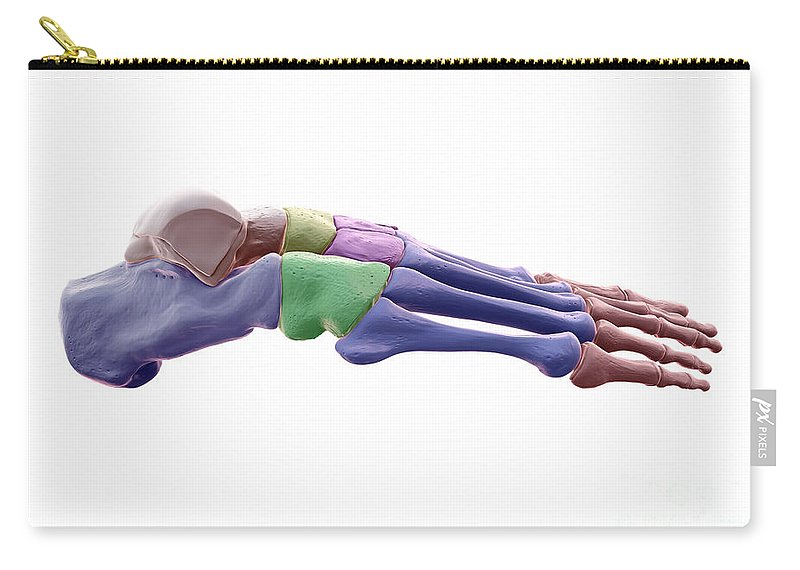 3d Model Carry-all Pouch featuring the photograph Foot Bones by Science Picture Co