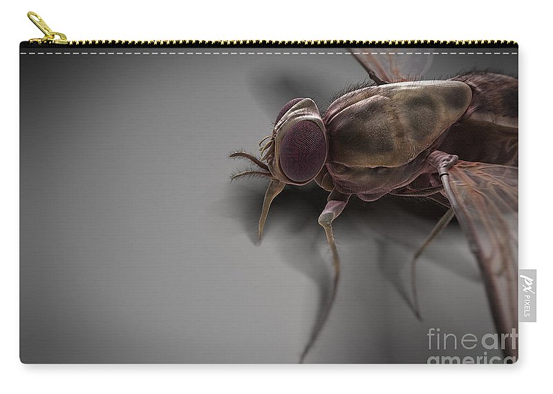 Haematophagy Carry-all Pouch featuring the photograph Tsetse Fly by Science Picture Co