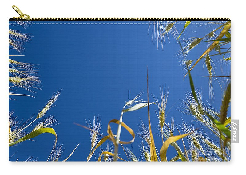 Wheat Carry-all Pouch featuring the photograph Wheat by Mats Silvan