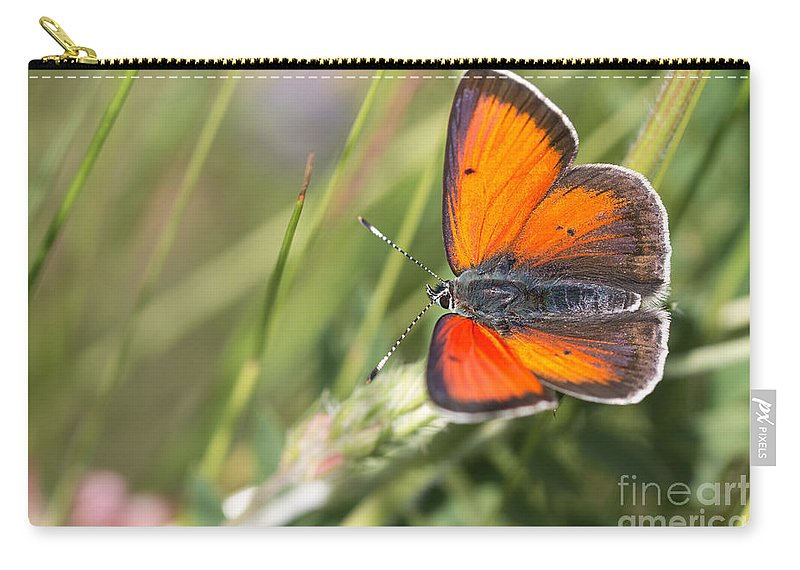 Balkan Copper Butterfly Carry-all Pouch featuring the photograph 17 Balkan Copper Butterfly by Jivko Nakev