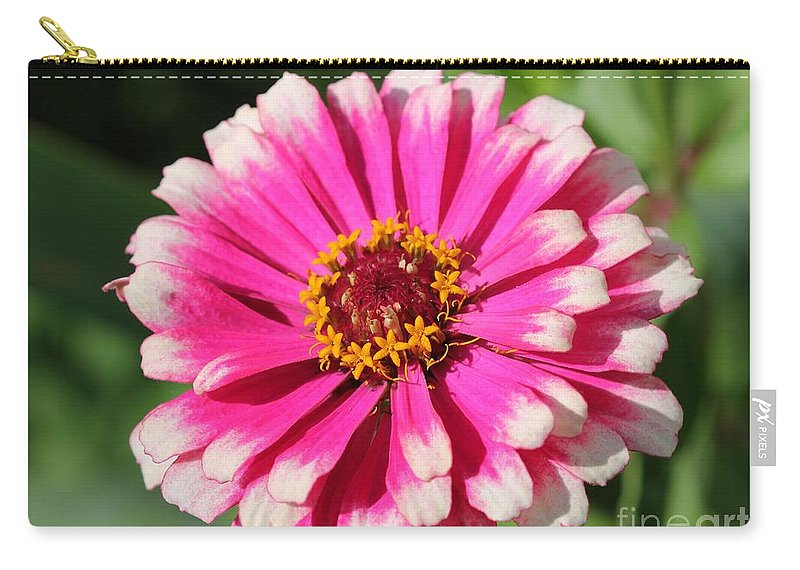 Mccombie Carry-all Pouch featuring the photograph Zinnia From The Whirlygig Mix by J McCombie