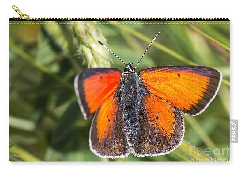 Balkan Copper Butterfly Carry-all Pouch featuring the photograph 18 Balkan Copper Butterfly by Jivko Nakev