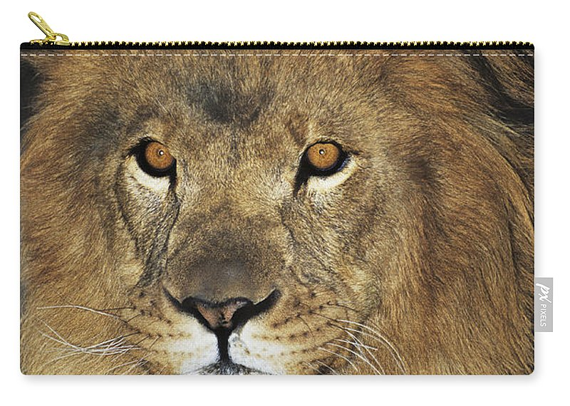 African Lion Carry-all Pouch featuring the photograph African Lion Portrait Wildlife Rescue by Dave Welling