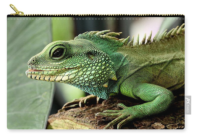 Agame Carry-all Pouch featuring the photograph Agame by Heike Hultsch