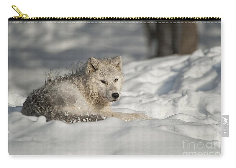 Arctic Wolf Photography Carry-all Pouch featuring the photograph Arctic Wolf Pup by Wolves Only