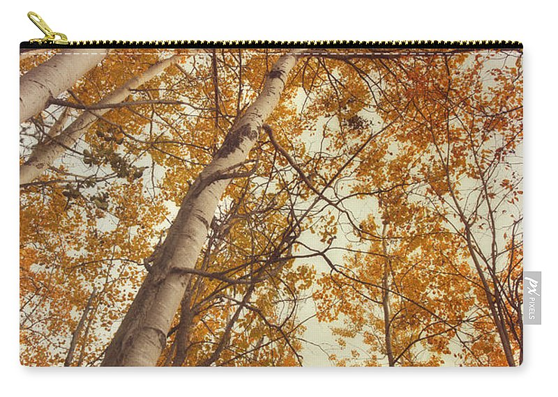 Aspen Carry-all Pouch featuring the photograph Autumn Aspens by Priska Wettstein