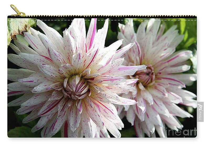 Dahlia Carry-all Pouch featuring the photograph Beautiful Twins by Christiane Schulze Art And Photography
