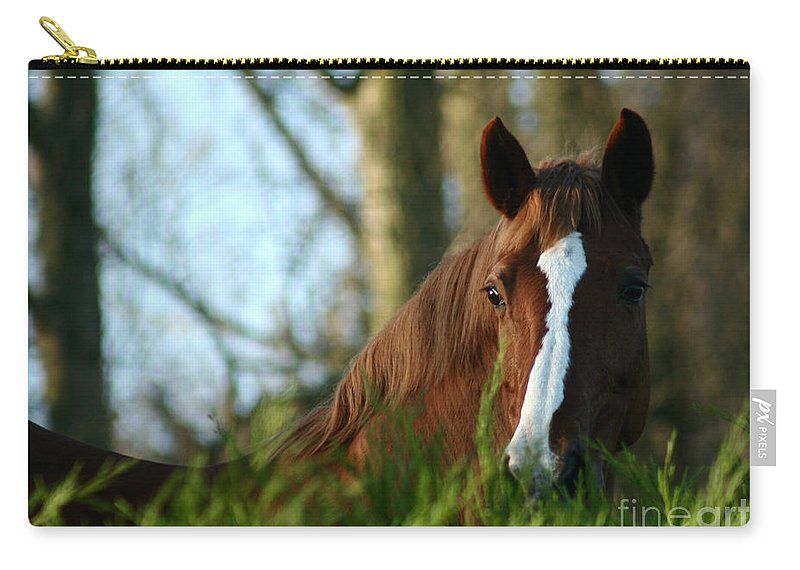 Chestnut Horse Carry-all Pouch featuring the photograph Behind The Fence by Angel Ciesniarska