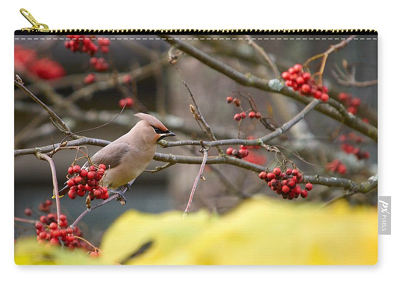 Autumn Carry-all Pouch featuring the photograph Bohemian Waxwing by Jouko Lehto