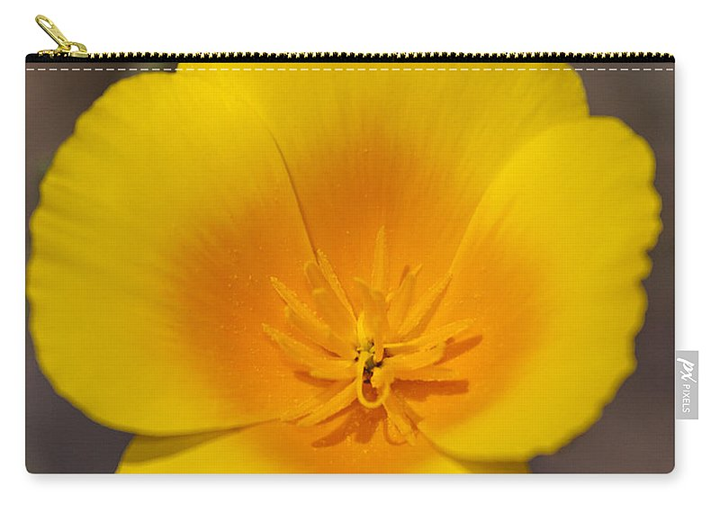 California Poppy Carry-all Pouch featuring the photograph California Sunshine by Caitlyn Grasso