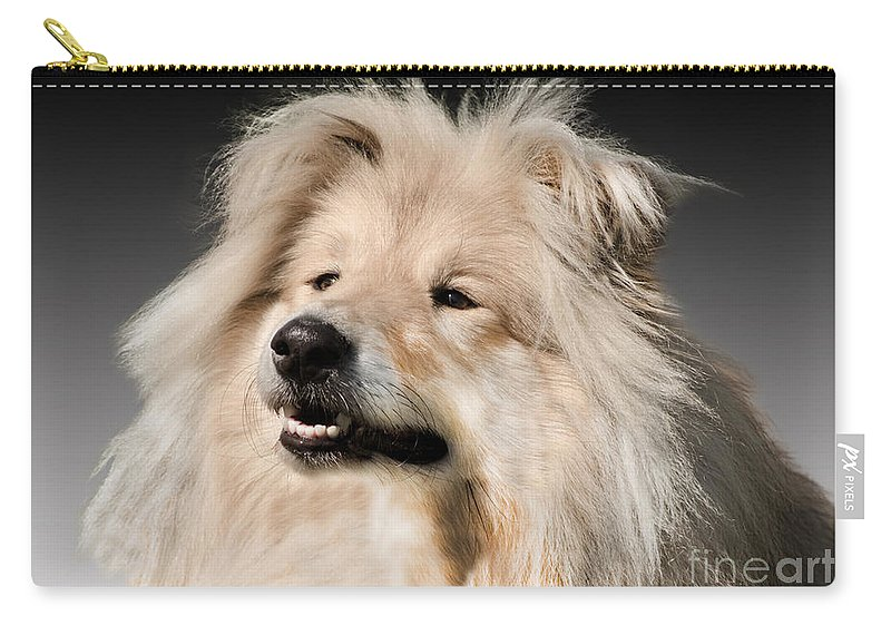 Black Background Carry-all Pouch featuring the photograph Collie Dog by Linsey Williams
