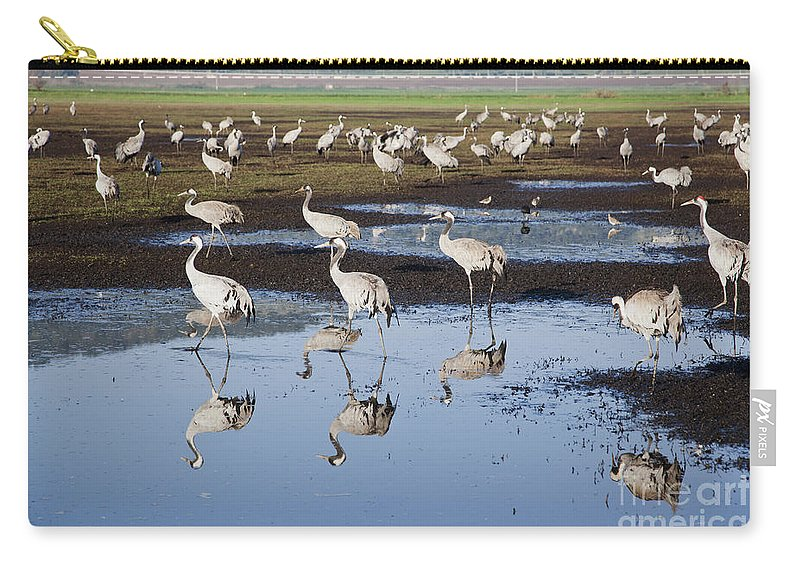 Migratory Carry-all Pouch featuring the photograph Common Crane Grus Grus by Eyal Bartov
