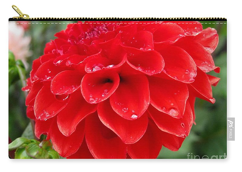 Mccombie Carry-all Pouch featuring the photograph Dahlia Named Ali Oop by J McCombie