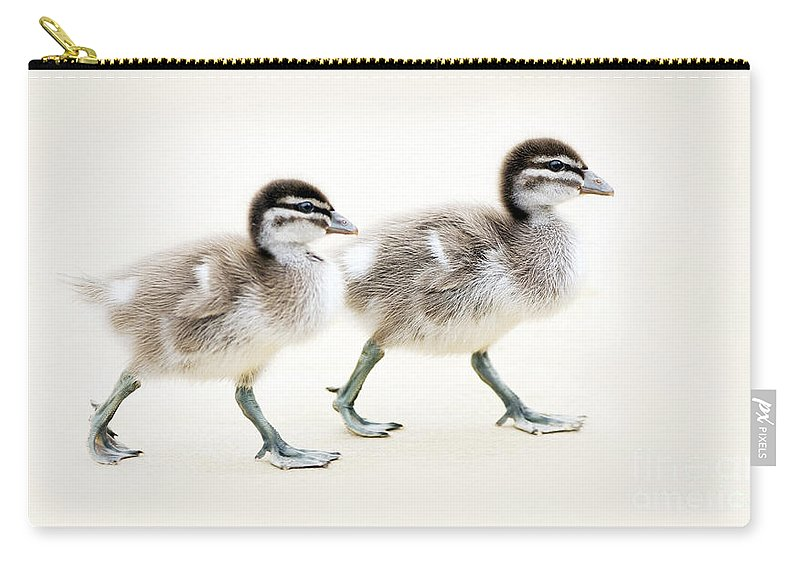 Ducklings Carry-all Pouch featuring the photograph Ducklings by Tim Hester