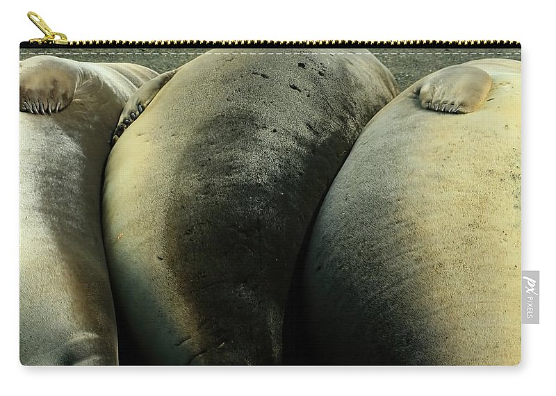 Juvy Elephant Seal Carry-all Pouch featuring the photograph Elephant Seal Pups by Amanda Stadther