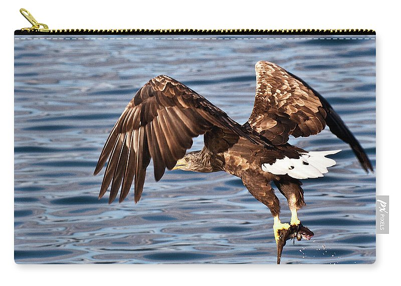 White_tailed Eagle Carry-all Pouch featuring the photograph European Fishing Sea Eagle 4 by Heiko Koehrer-Wagner