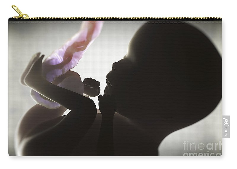 3d Visualisation Carry-all Pouch featuring the photograph Fetus In Utero Week 15 by Science Picture Co