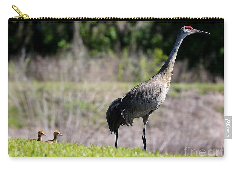 Sandhill Crane Chicks Carry-all Pouch featuring the photograph Follow The Leader by Carol Groenen