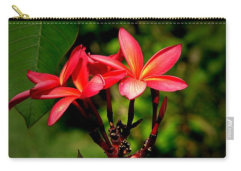 Frangipani Carry-all Pouch featuring the photograph Frangipani by David Weeks