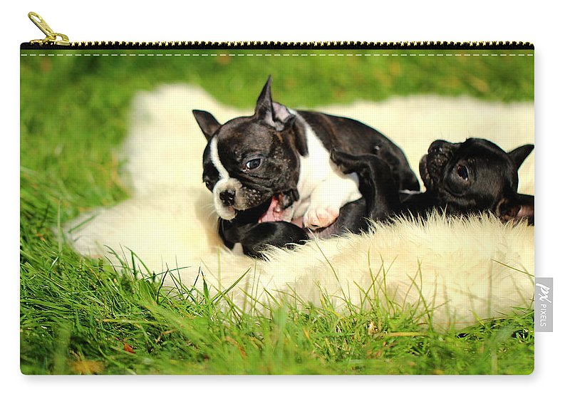French Bulldogs Carry-all Pouch featuring the photograph French Bulldoggs by Heike Hultsch