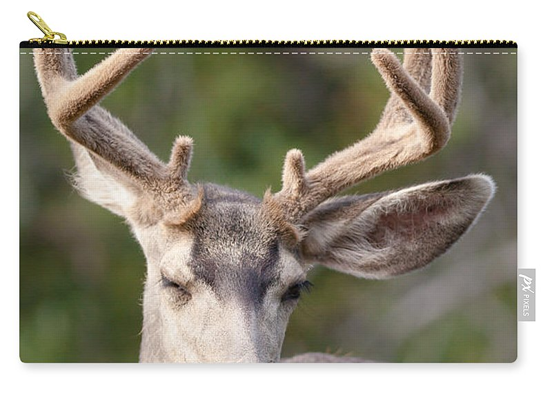 Adult Carry-all Pouch featuring the photograph Funny Mule Deer Buck Portrait With Velvet Antler by Stephan Pietzko