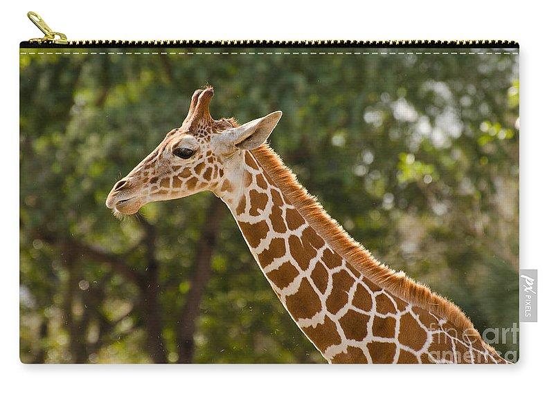 Giraffe Carry-all Pouch featuring the photograph Giraffe by Les Palenik