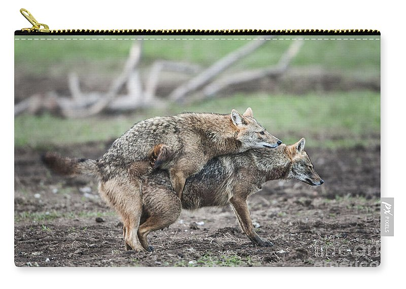 Mating Carry-all Pouch featuring the photograph Golden Jackal Canis Aureus by Eyal Bartov